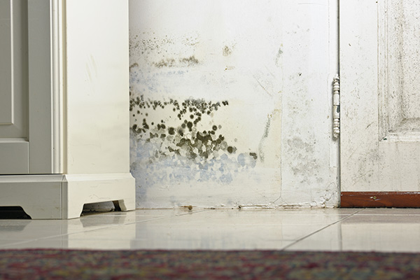 mold removal windsor